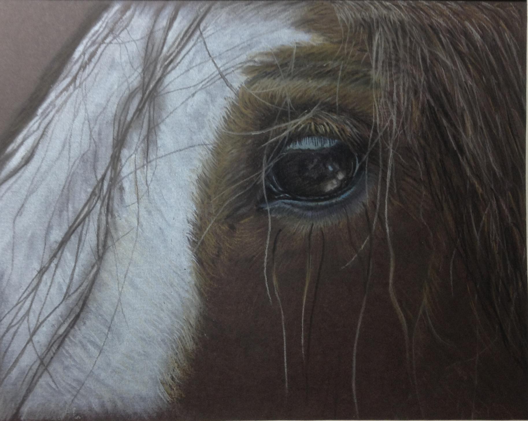 Brown horse eye