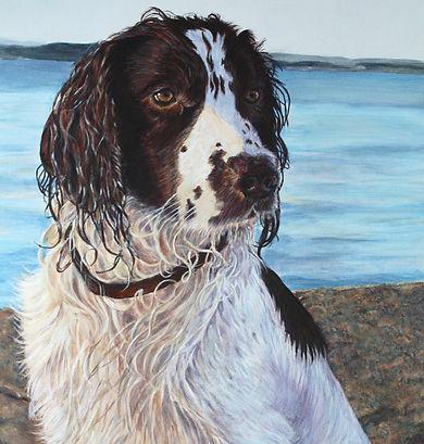 Holly,springer, springer, spaniel, Katherine Cromwell, Dorset artist, Poole artist, pet portrait