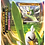 Deck à thème: EB03 Ténèbres Embrasées - Palarticho de Galar [FR]