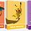 decks académie de combat pokémon