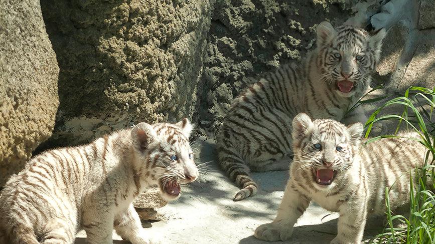 Ижевский зоопарк + Ижевские термы