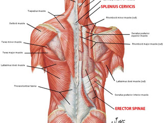Lower Back Pain and Massage