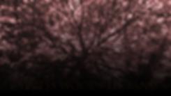 WoodsWebsite.png