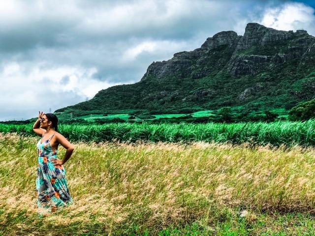 Mauritius Sugar Canes