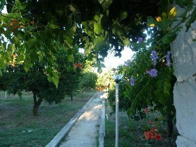 Back garden pathway