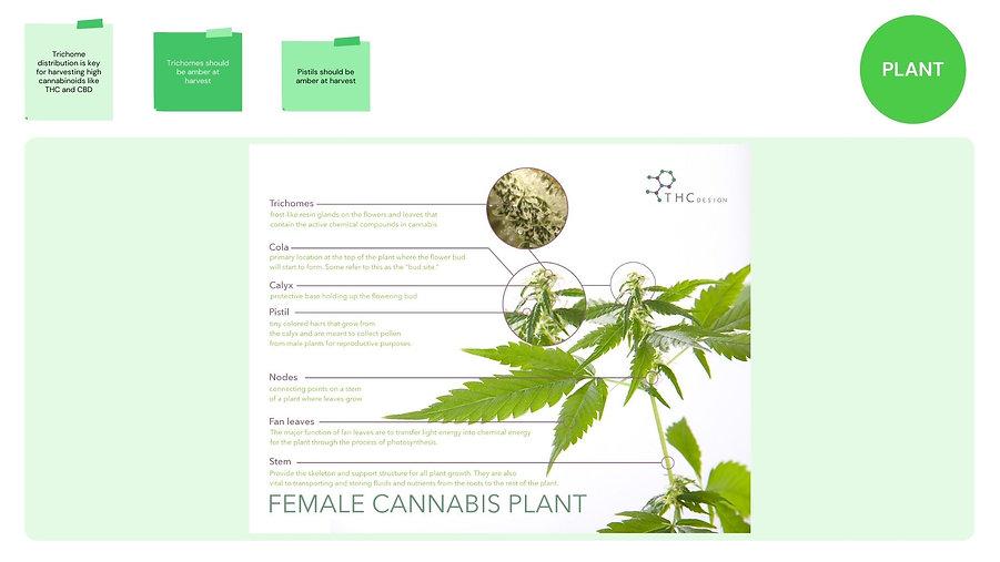 Plantclassimage1.jpg