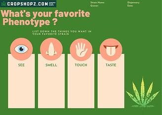 Green Peach Five Senses Graphic Organize