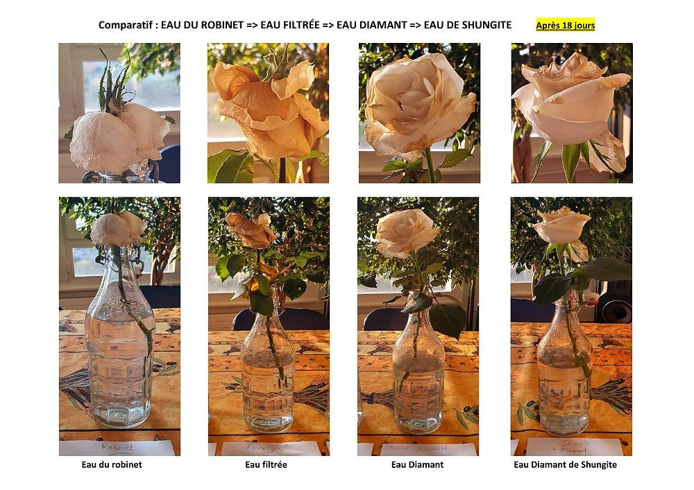 Comparatif eau du robinet vs eau dynamisée après 18 jours