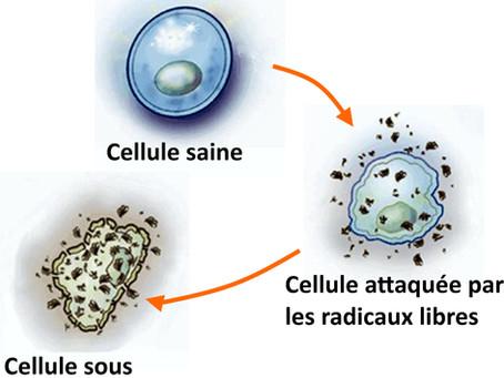 L'équilibre acido-basique est aussi en lien avec les allergies !
