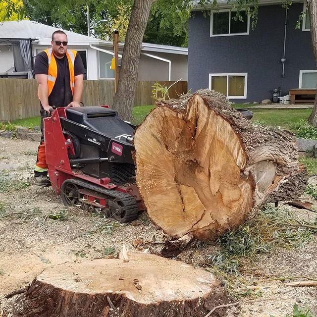 Tree Removal Brandon Manitoba www.advanc