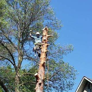 Tree Removal Brandon MB