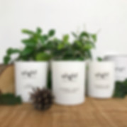 Winter Collection Scented Soy Candles.JP