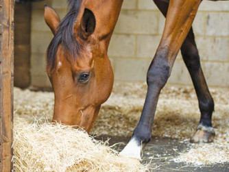 DOES EATING FROM A HAYNET CAUSE BACK PROBLEMS IN HORSES?