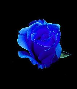rosas-azules-800x800.jpeg