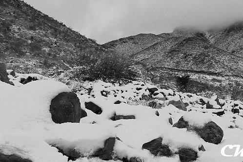 Snow Slumber Photo Print