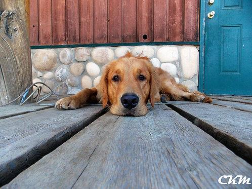 Dog Thoughts Photo Print
