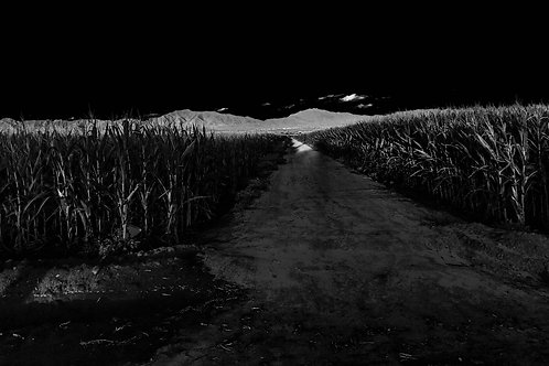 Among the Fields Photo Print