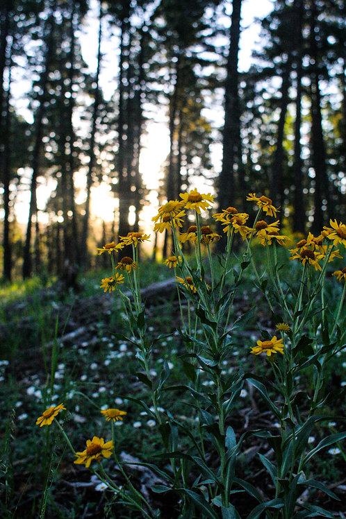 Morning Blooms Photo Print
