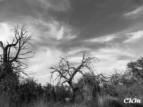 Solitude Photo Print