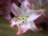 Практика «Цветок души»