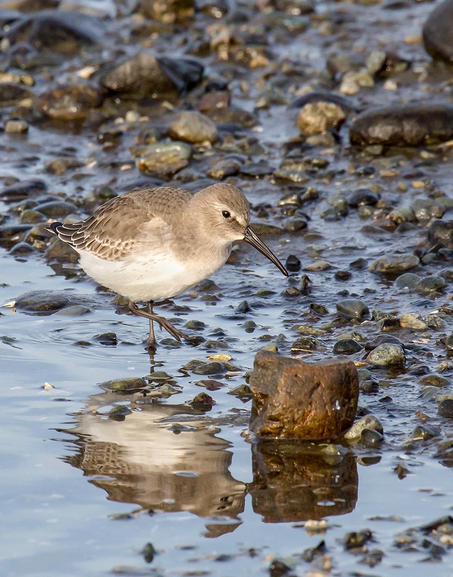 Shorebird at Beach