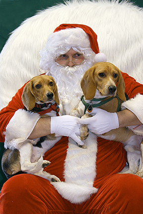 Christmas Fund Raiser-2 Beagles