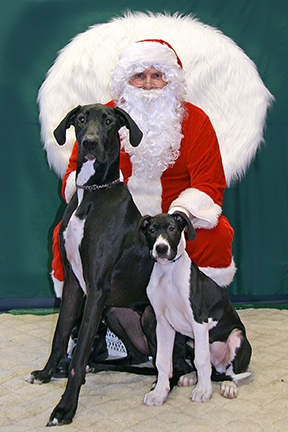 Christmas Fund Raiser-Great Dane/Pup