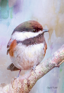 Chickadee-Art Effect