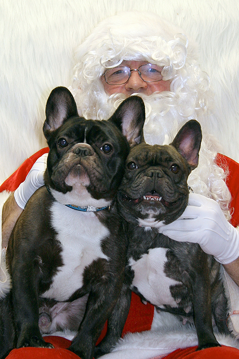 Christmas Fund Raiser-French Bullies
