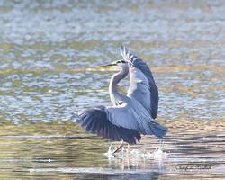 Heron Landing 3
