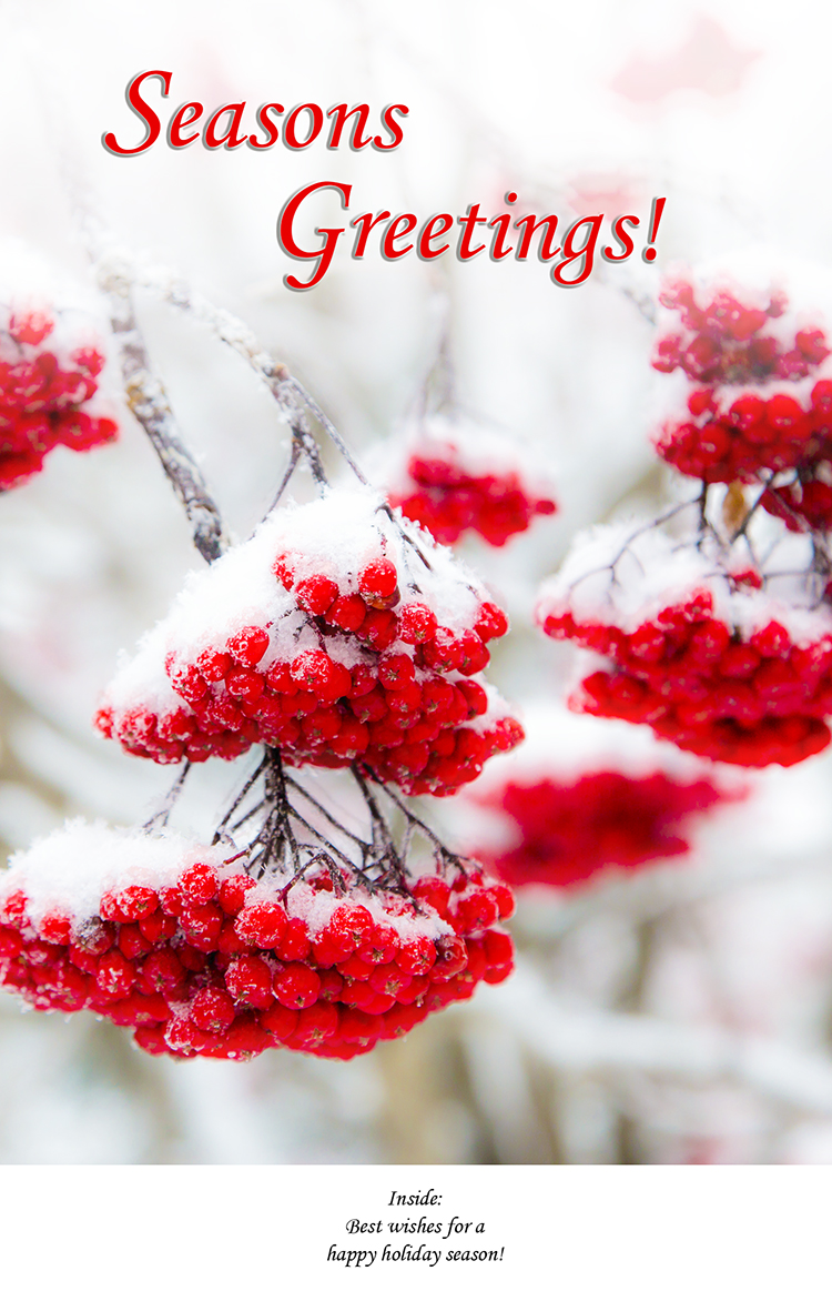 Greeting Card-Red Berries in Snow