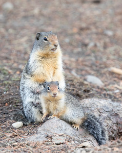 Gopher with Baby 1