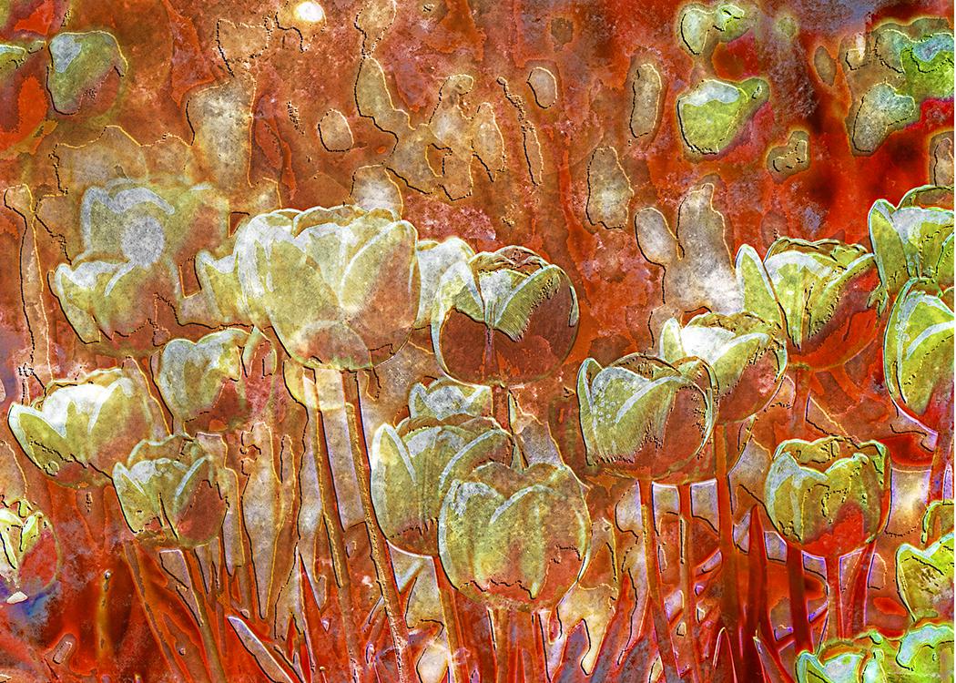 Copper Tulips