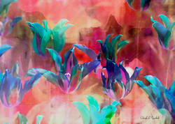Multicoloured Tulips
