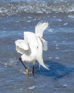 Egret in Surf