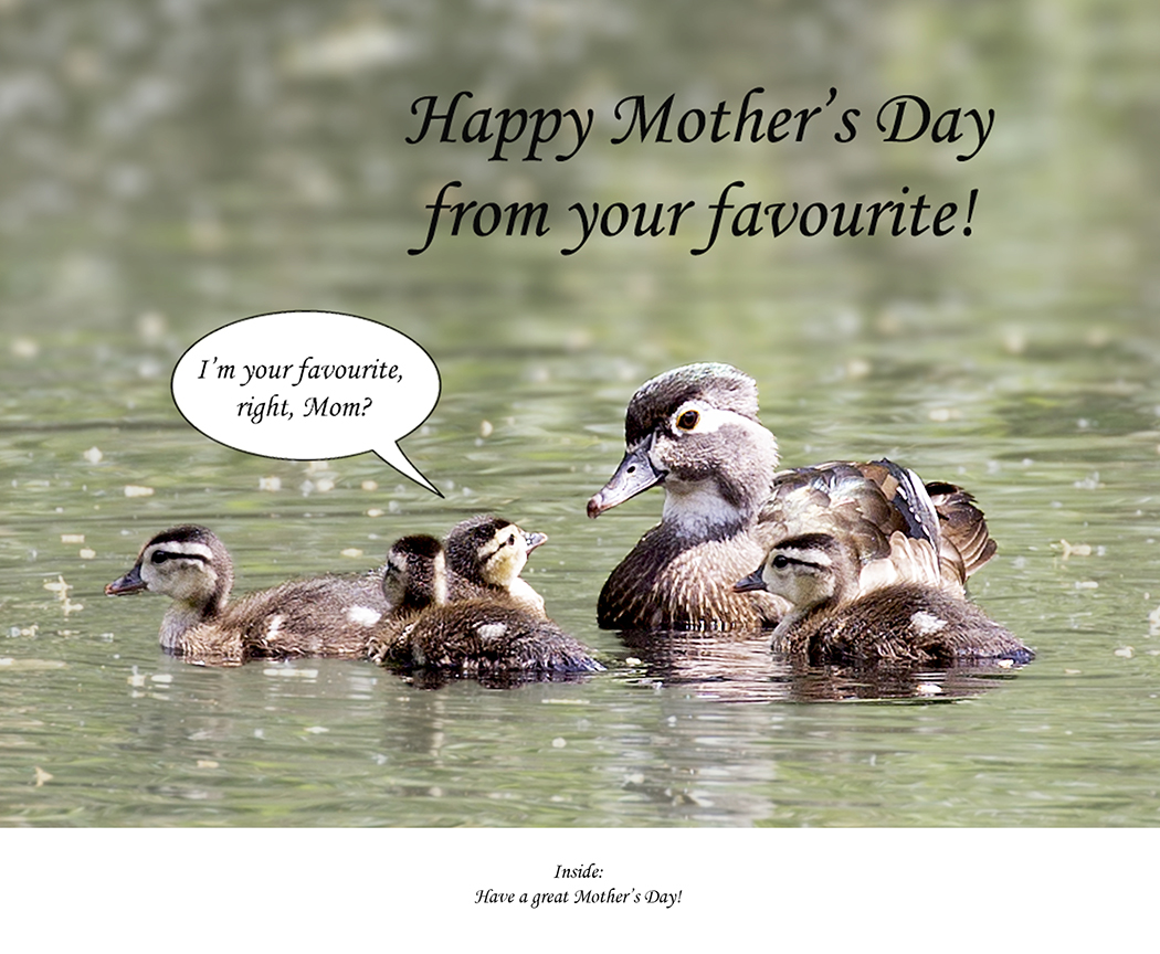 Happy Mother's Day from ...