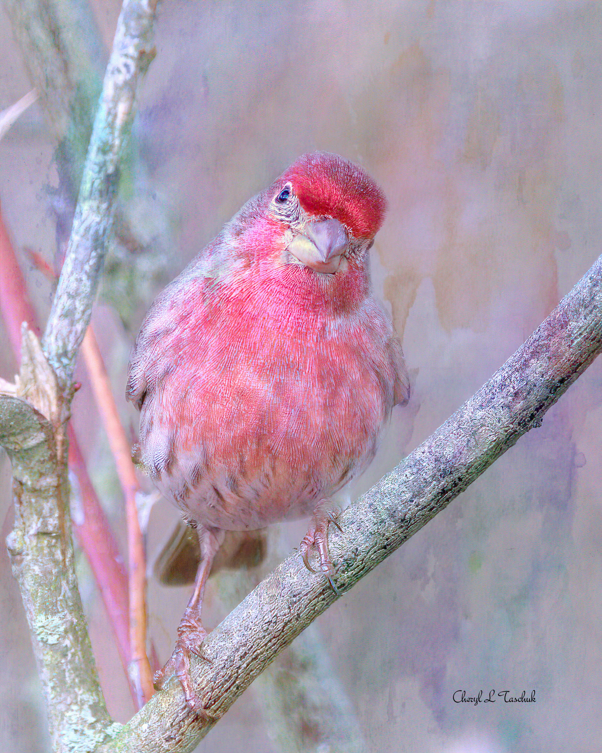 Purple Finch Art Effect