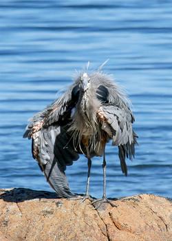 Bad Heron Day