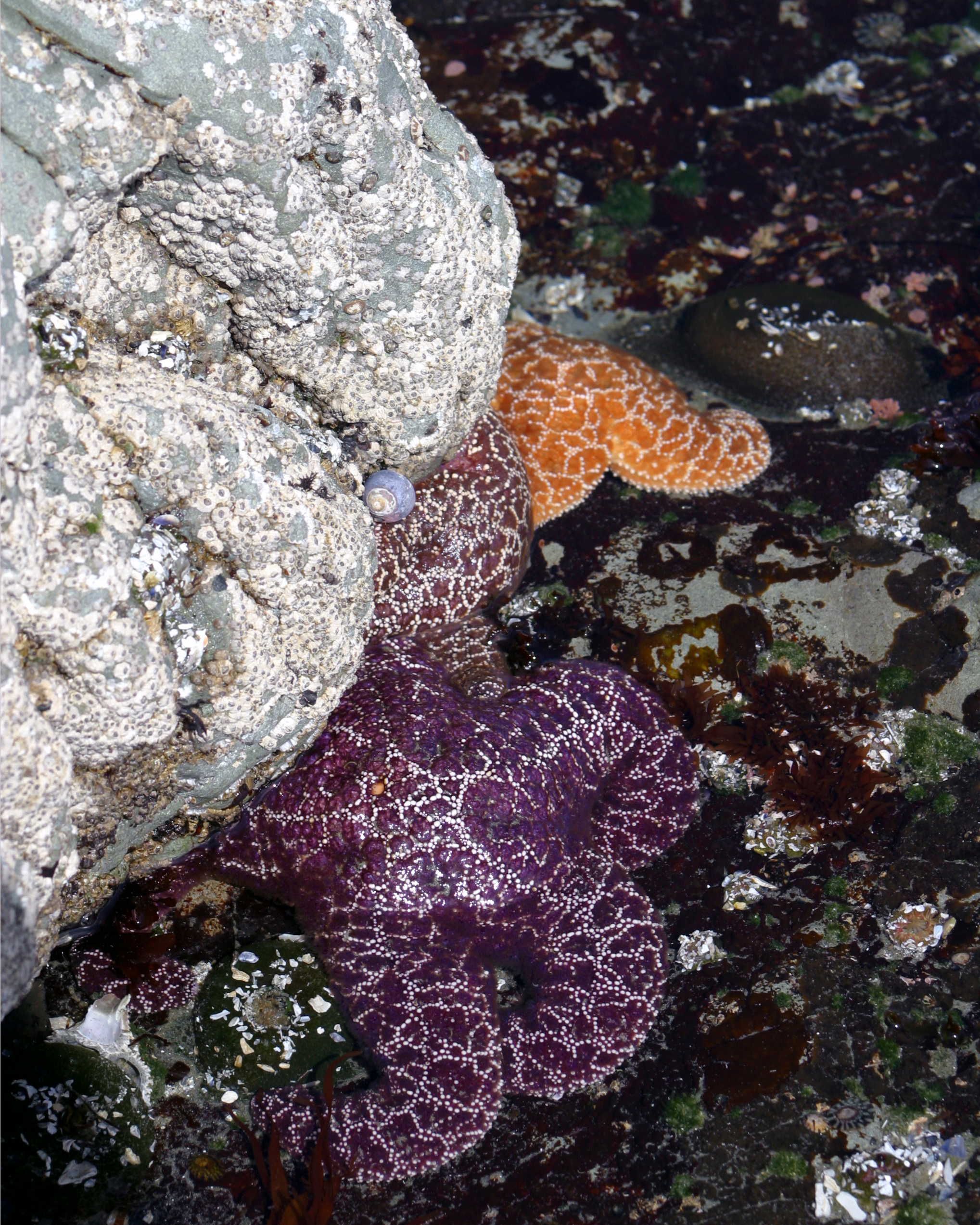 Three Starfish Rock