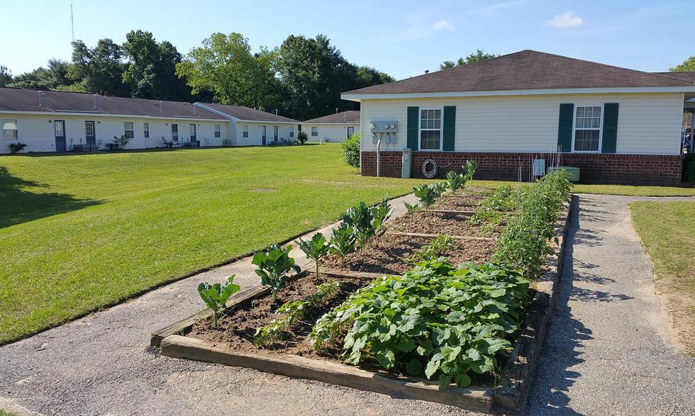 Albany spring community garden