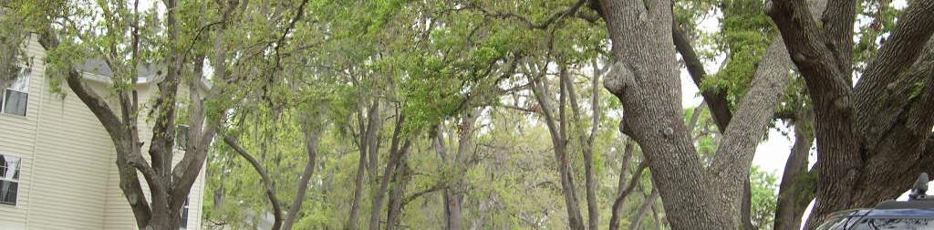 Community tree canopy