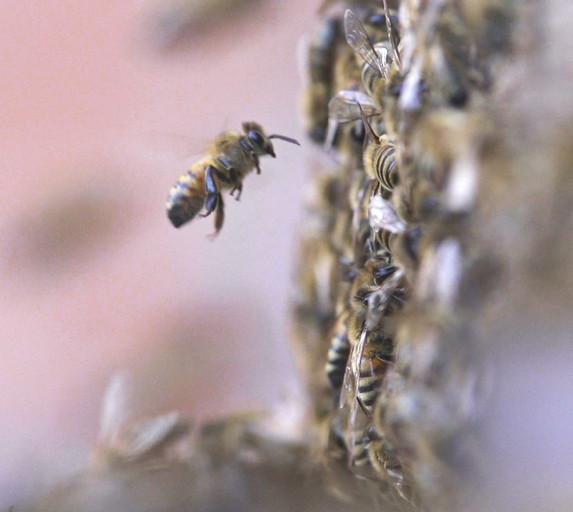 Rooftop Bees Update