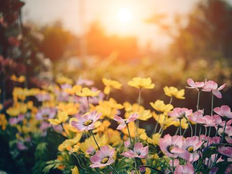 5 Summer Garden Tips