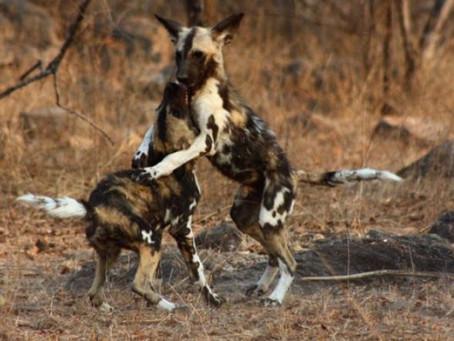 Wild Men, Wild Women & Wild Dogs