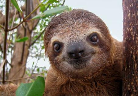 The Secret of Sloths