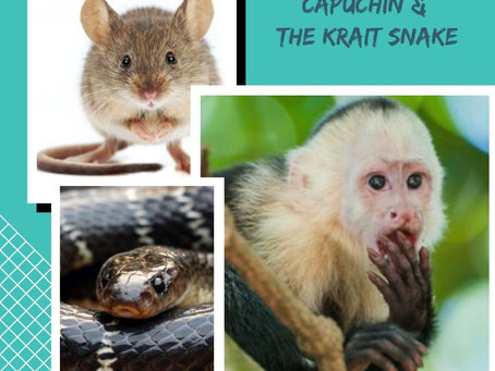 The MOUSE, the CAPUCHIN & the KRAIT SNAKE