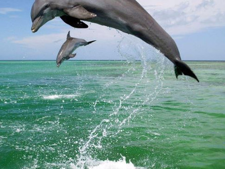 The Joy of Dancing with Dolphins