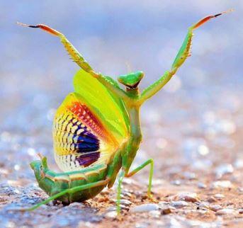 The Praying Mantis & the Snake