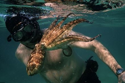 Is it possible to be Friends with an Octopus?