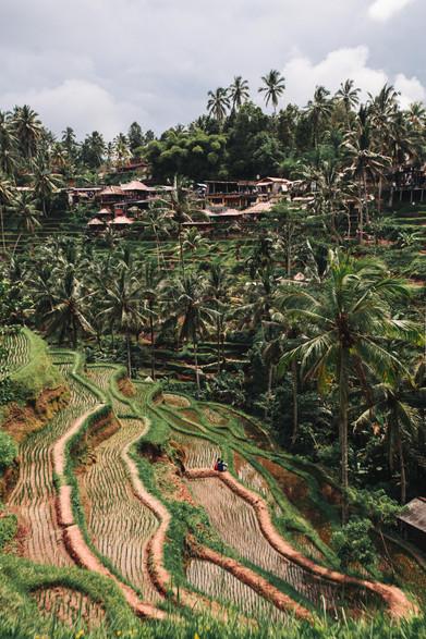 Tegalallang, Bali II